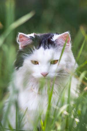 Photo of a cat in a grass