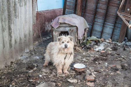 Photo of a hungry dog in poor quarter Reklamní fotografie