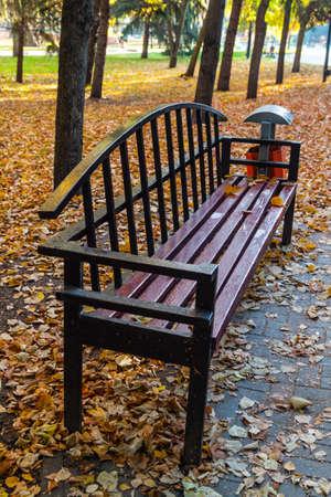 Bench photo in autumn park