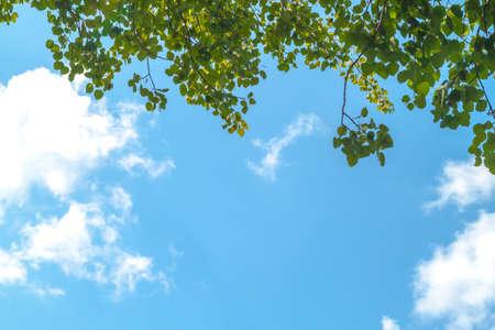 Foto van groene bladeren tegen wolken