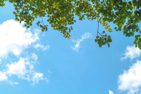 sky blue: Photo of green leaves against clouds
