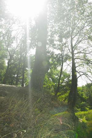 Sun beam in the foggy wood Reklamní fotografie