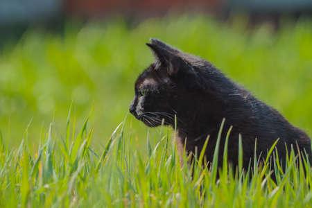 a black cat in a grass