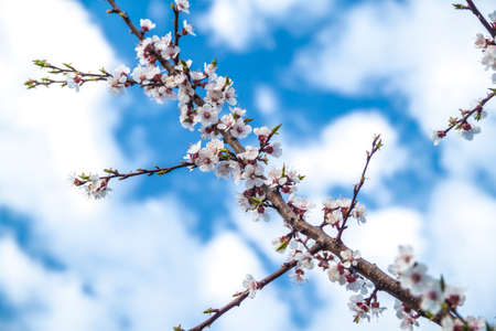 Photo of the blossoming tree