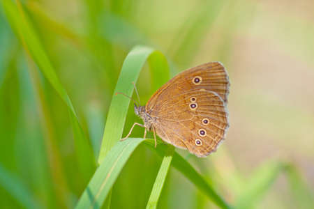 Photo of a butterfly on a green grass