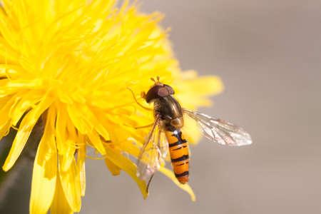 Photo of a fly on a yellow flower Reklamní fotografie