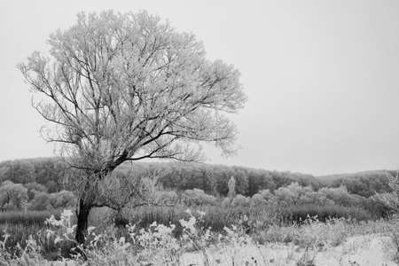 Black and white photo of a tree in winter