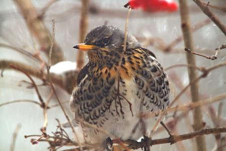 Jay bird on the branch Reklamní fotografie
