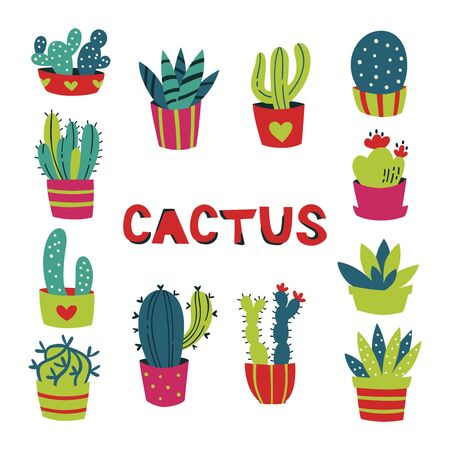 Hand Drawn Cactus and Succulents Isolated on White Background