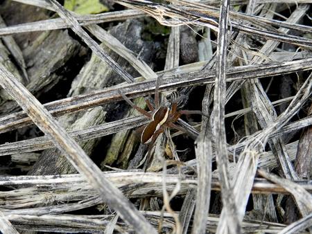 eight legged: SPIDER-EUROPEAN