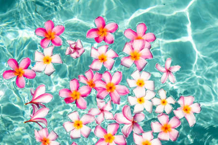frangipani flower floating in clear blue water, with copy space. 版權商用圖片