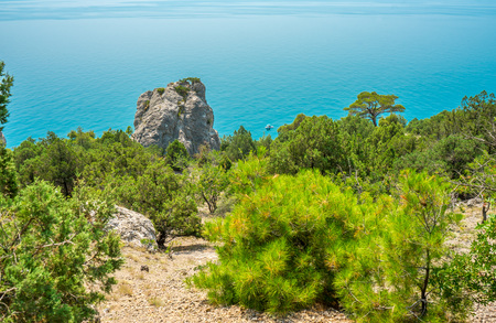 sudak: Pine and juniper forest growing on the rocks near the trail to the village of Novy Svet in the Crimea