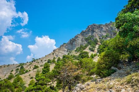 enebro: Montaña Karaul-Oba en Crimea