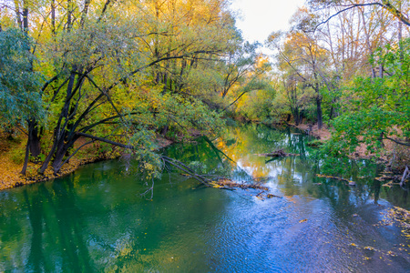 yellowing: Trees with yellowing leaves in autumn by the river
