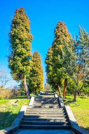 Staircase in the arboretum in Sochi. Russia