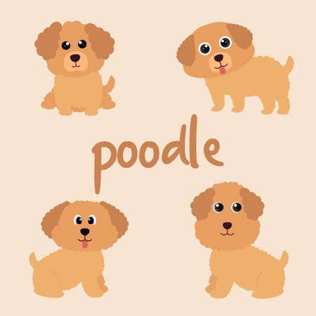 Set Character Animal In Various Poses Of Cute Poodle Dog Is Sitting, Sleep, and Jumping. Vector Illustration