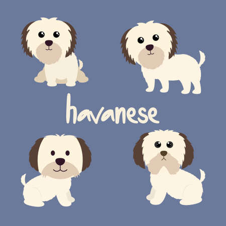 Set Character Animal In Various Poses Of Cute Havanese Dog Is Sitting, Sleep, and Jumping. Vector Illustration 矢量图像