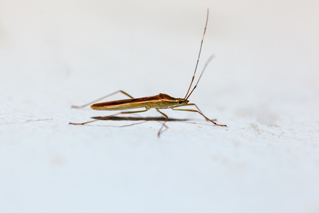 on the ground stay an Heteroptera waiting for get off photo