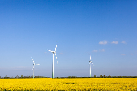 a field of rapeseed plants where there are between different wind turbines photo