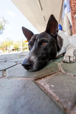 leis: su un duckboards ILO una streetdog in attesa di qualcosa Archivio Fotografico