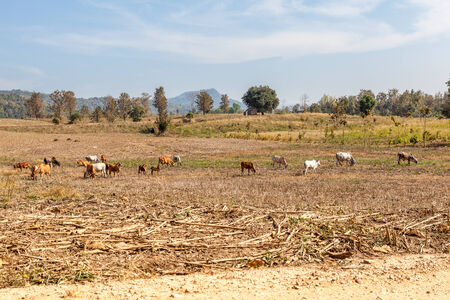 cuntry: In Thailand there are beautiful mountains and fields whit cows