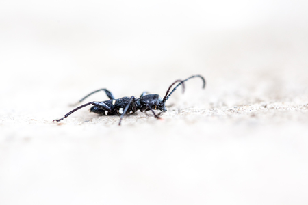 ground beetle: an beetle on the ground in close up