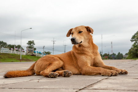 at the road of Thailand stay an streetdog of decking or road Stock Photo