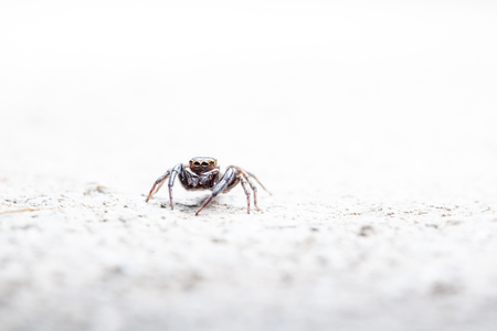 jumping spider: on the concrete floor there is a Jumping spider