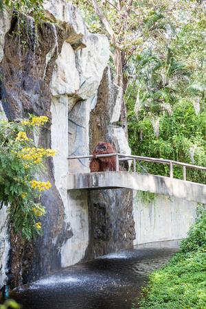 utang: on an concrete walkway is an orangutan