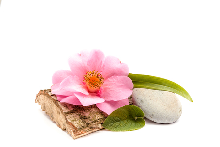 spa flower: Pebbles and trunk with flower theme for Ayurveda on an white background Stock Photo
