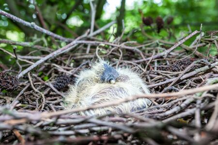 in an forest in a tree there are newborn birds