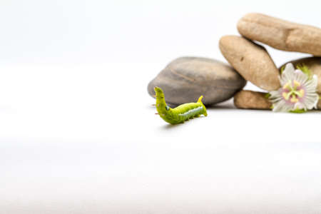 purple flower pebbles and stones and an Daphnis Nerii Stock Photo