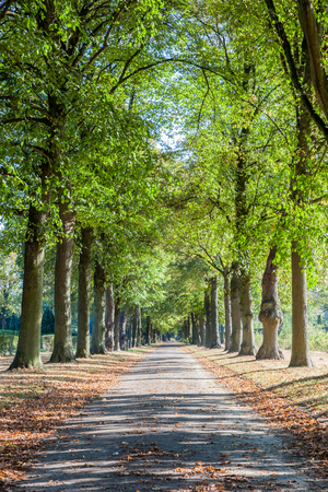 footpath along this beautiful trees without leaves in winter Stock Photo