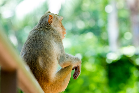 The macaque is eating from an tree Stock Photo