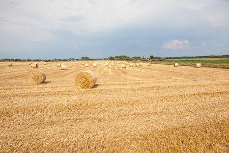 after harvesting the crop, a hay bale was made with the surplus