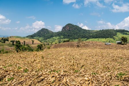 This corn field is in the hills in northern Thailand