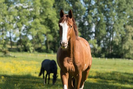 on a sunny morning there is a horse in the pasture