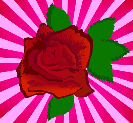 red beauty rose; clip-art Vector