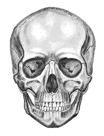 Skull. Trace, don't easy edit Stock Photo - 12727387