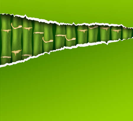Color bamboo background with green ripped paper Stock Photo - 12724390