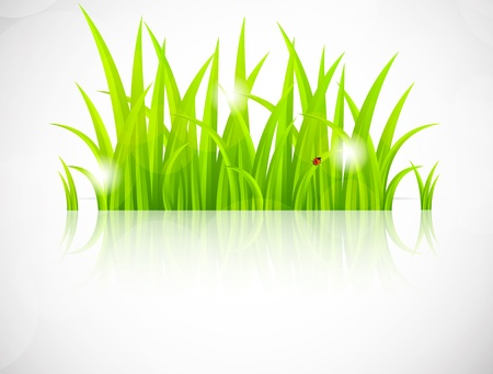 Background with green grass. Abstract spring illustration Vector