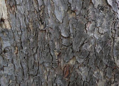 brak: background of tree brak texture Stock Photo