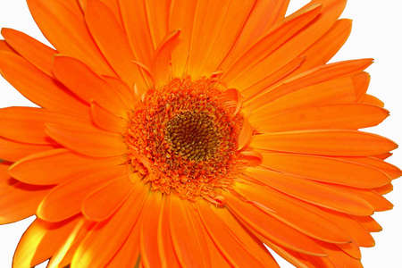 Nice isolated orange flower macro Stock Photo - 2667066