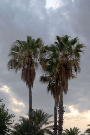 Group of palms and cloudy sky