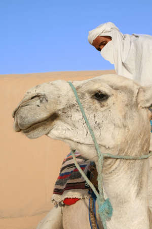 Bedouin prepares his camel for the ride Stock Photo