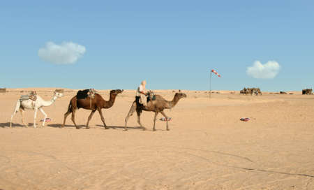 Nomad riding on first of three camels Stock Photo