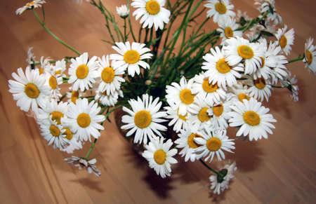 Beautiful bouquet of fresh chamomiles Stock Photo - 3062034