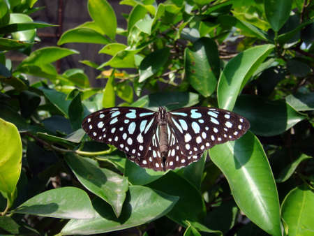 Little butterfly flying above bushes