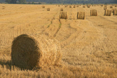 Big stacks on a summer field Stock Photo
