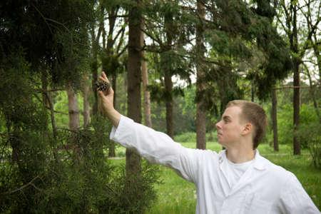 Botanist examinating strobile in forest